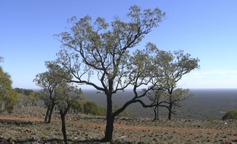 Mount Oxley views